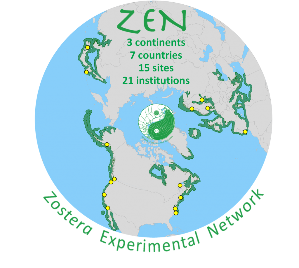 The cross-site ZEN experiment from 2011 is in press at Ecology Letters!