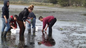 The UCD ZEN class samples an experiment in Bodega Bay, California