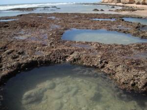 Tidepooling on the Algarve coast