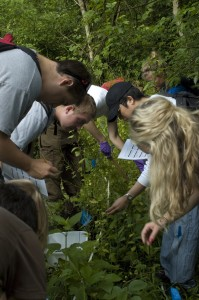 Students and volunteers work with scientists to survey garlic mustard plants (Robert Colautti)